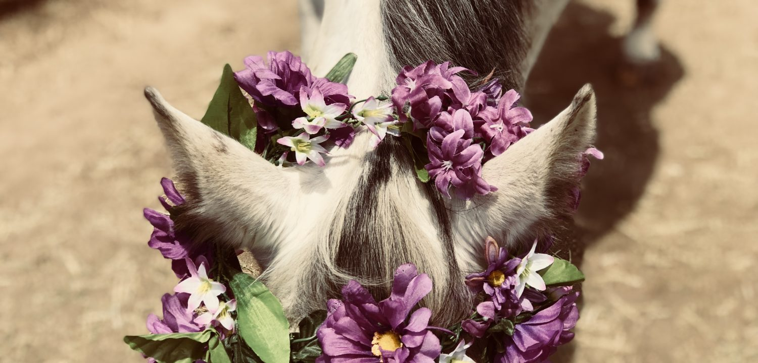 Purple Flower Wreath at Short Manes