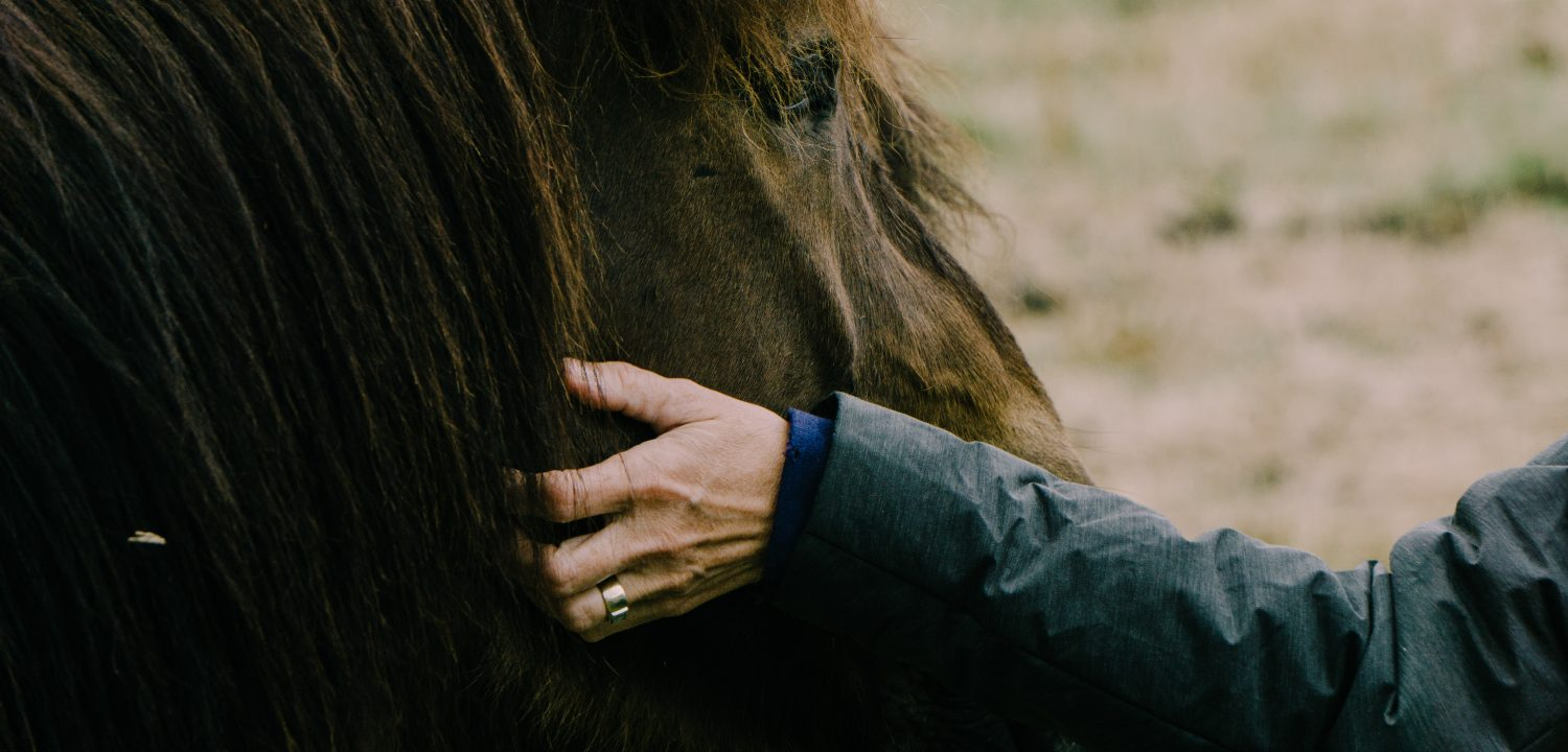 How to get in shape and bond with your horse