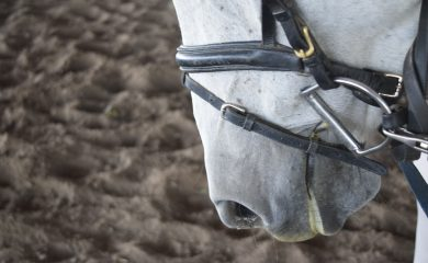 All About Bridles